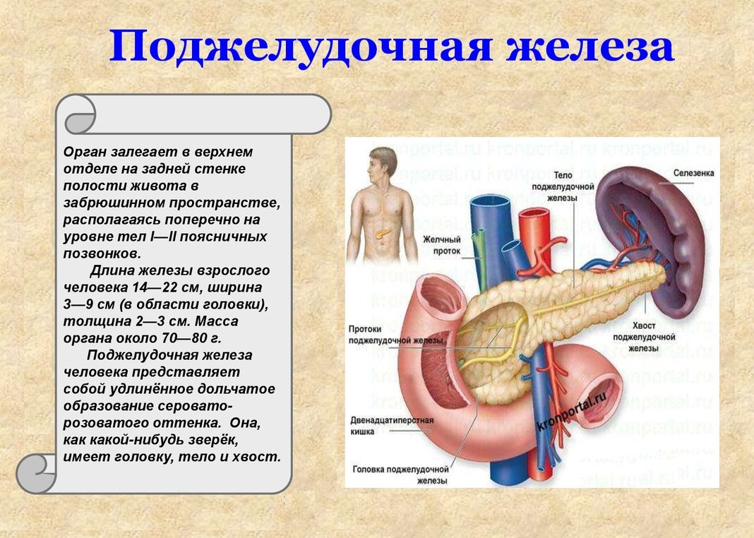 Жесткая диета поджелудочная железа